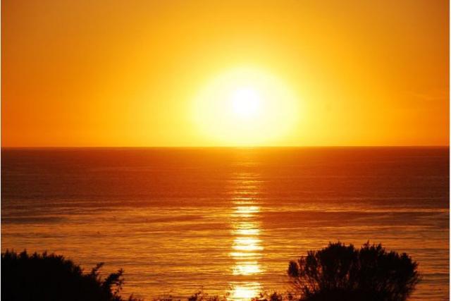 海鸥海边夕阳油画
