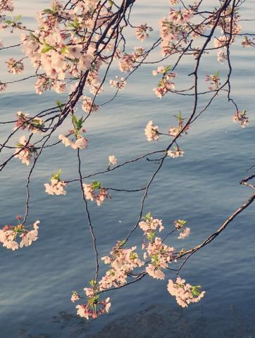 春梦了无痕