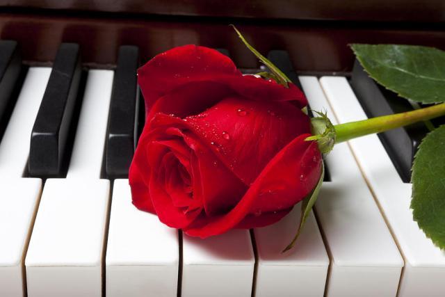 心中的玫瑰…情人节记忆