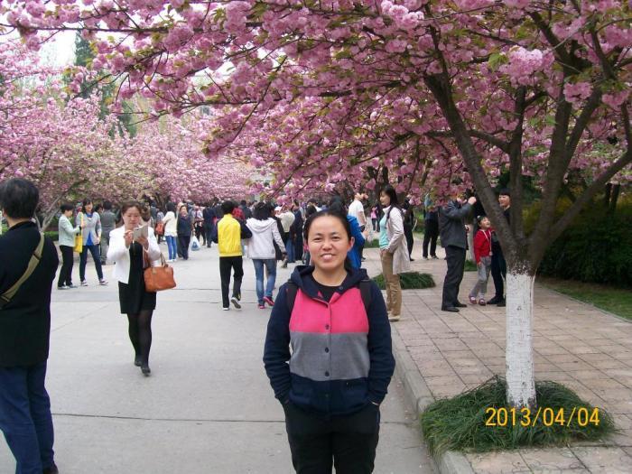 中科大校园里的那株绿色樱花,是合肥市唯一的绿色樱花.
